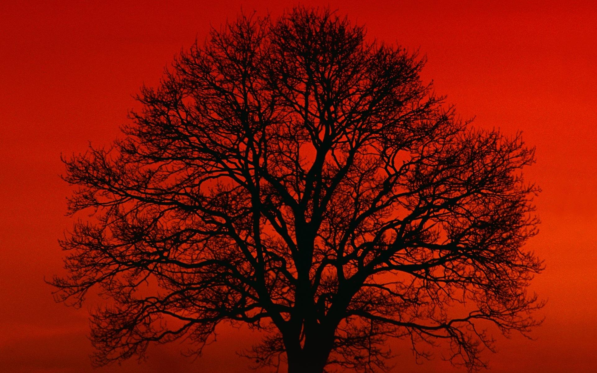 Любовь.  Красное дерево.